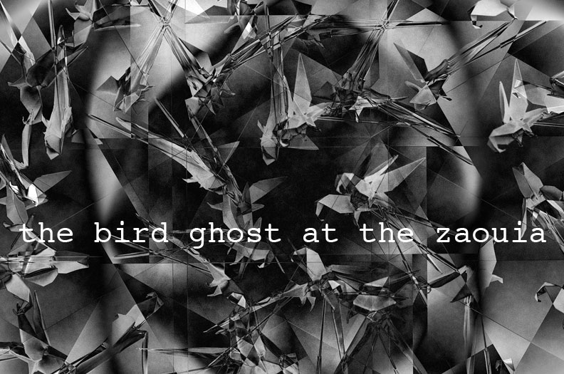bird ghost at the zaouia